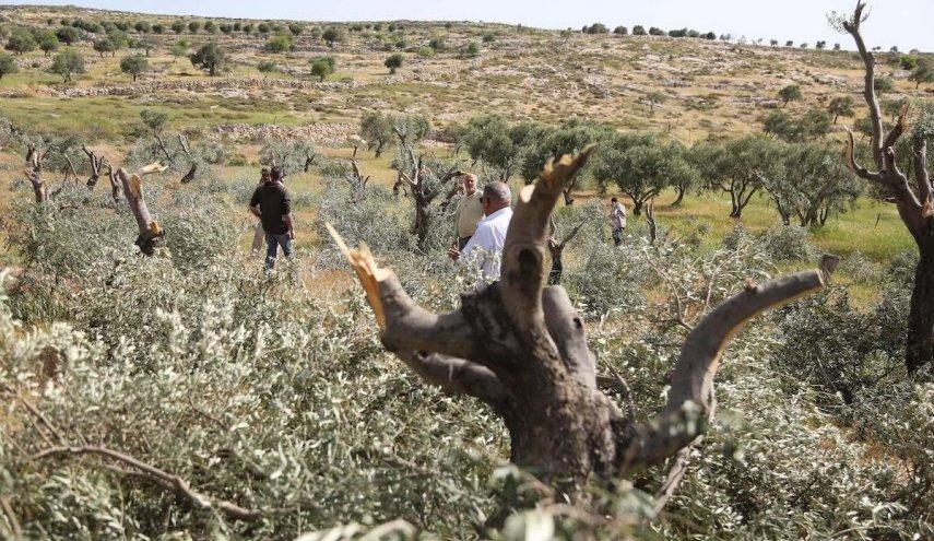 تخريب اراضي المزارعين الفلسطينيين على يد المستوطينين