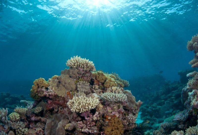 """بالصور: بعد ربع مليار عام على اختفائها.. اكتشاف """"أحفورة حية"""" في قاع المحيط!"""