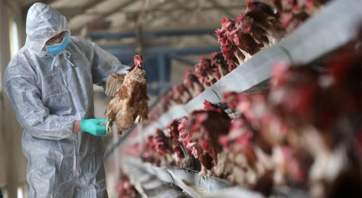 التلفزيون الصيني: إقليم سيتشوان يسجل إصابة بشرية بسلالة (أتش5أن6) من إنفلونزا الطيور