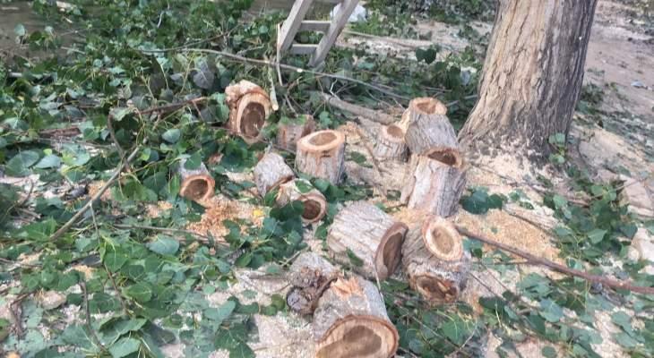 بلدية صير الغربية تستنكر مجزرة قطع الأشجار على ضفاف الليطاني